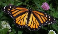 В Мексике наступил долгожданный сезон бабочек